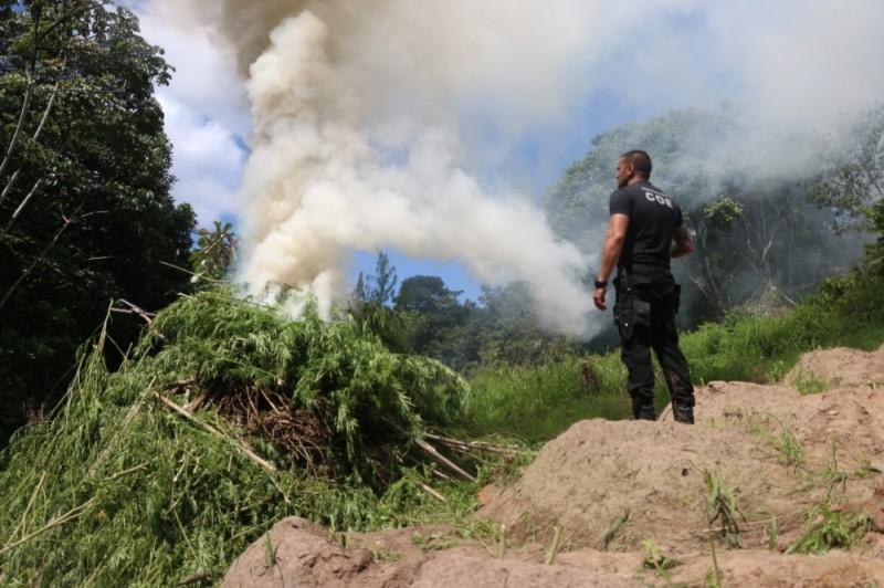 Foto: Alberto Maraux Cerca de 1,5 tonelada foi encontrada, no município de Esplanada, na quarta-feira (9), na zona rural.